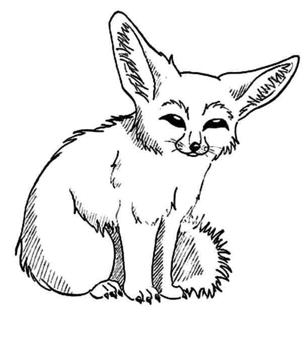 600x671 Desert Fox Picture Coloring Pages