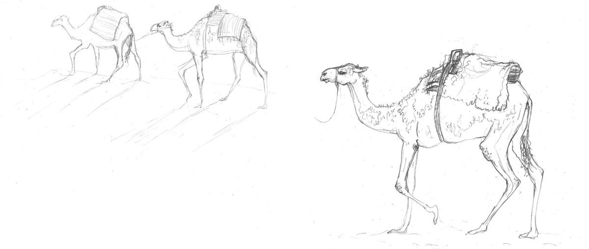 1200x509 Amy Holliday Illustration Tourist Camel Trek Camels Of Tunisia