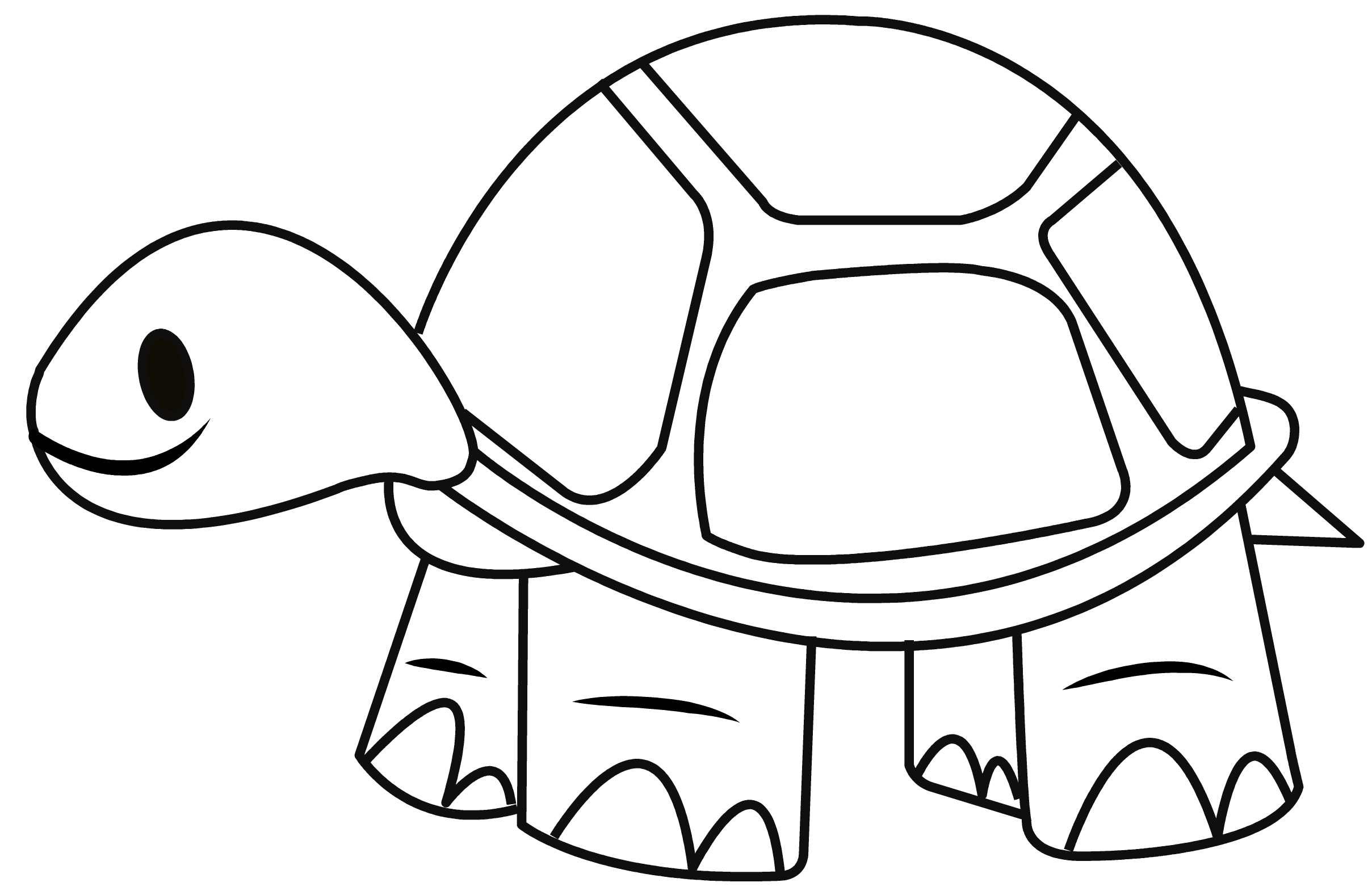 2417x1577 How To Draw A Tortoise
