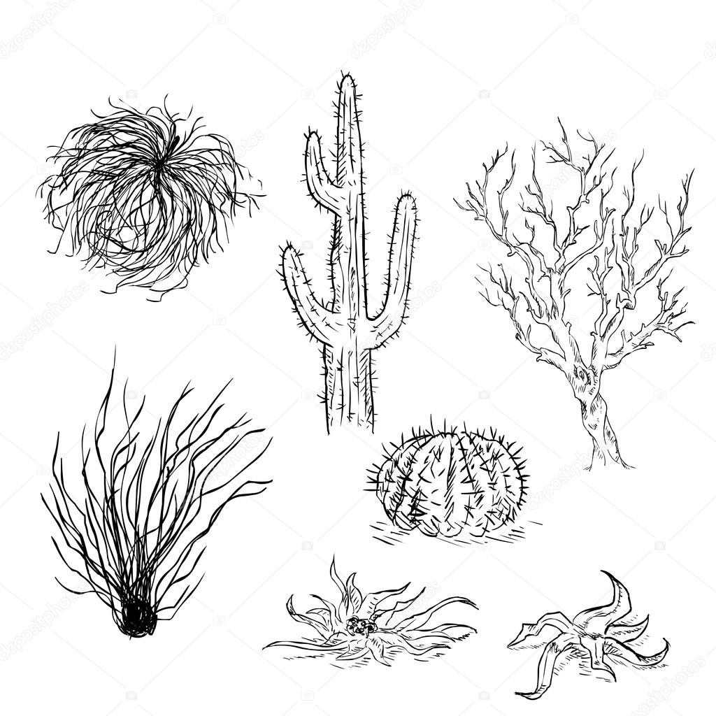 1024x1024 Set Of Sketch Cactuses And Desert Plants Stock Vector Nikiteev