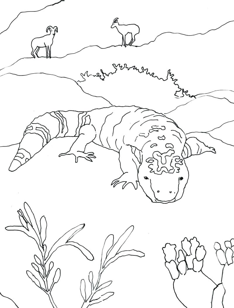 800x1050 Coloring Desert Animals Coloring Pages Monster Page Sonoran