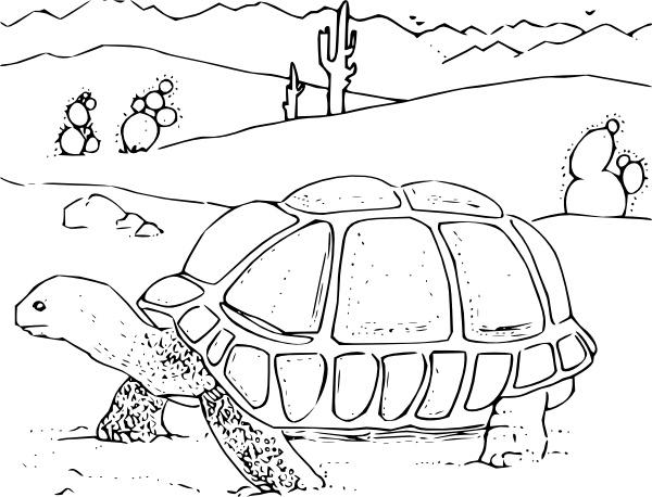 600x458 Coloring Book Desert Tortoise Clip Art Free Vector In Open Office
