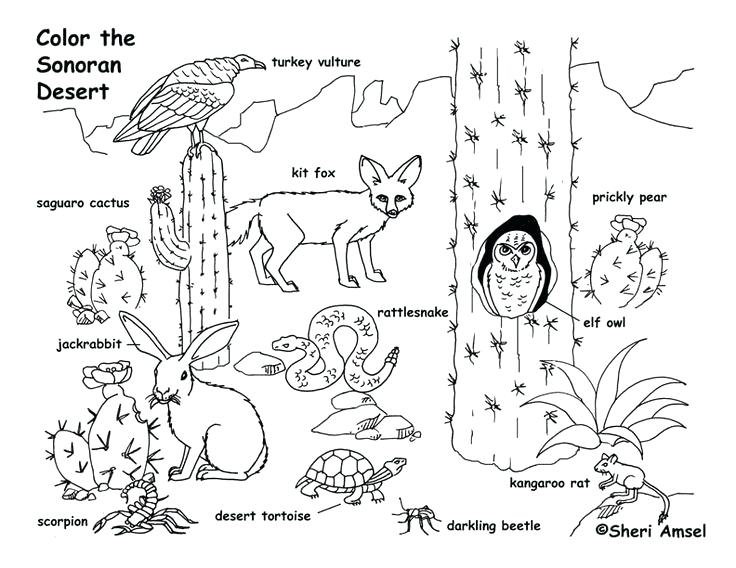 736x568 Desert Animal Coloring Pages Animals Page Des On Animals To Color