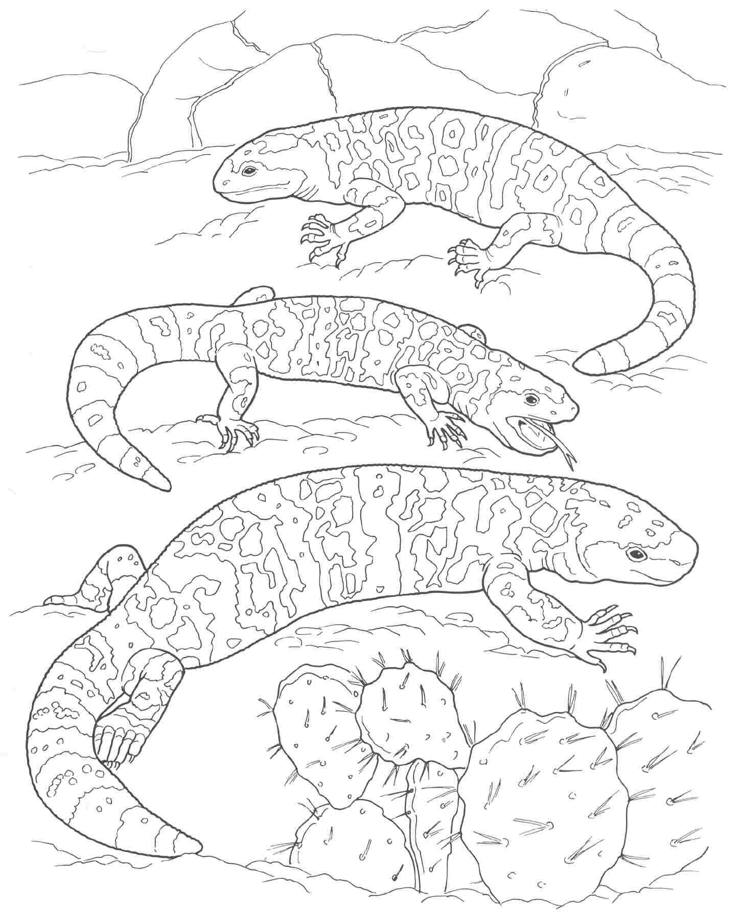 1444x1788 desert animal coloring pictures for good print printable