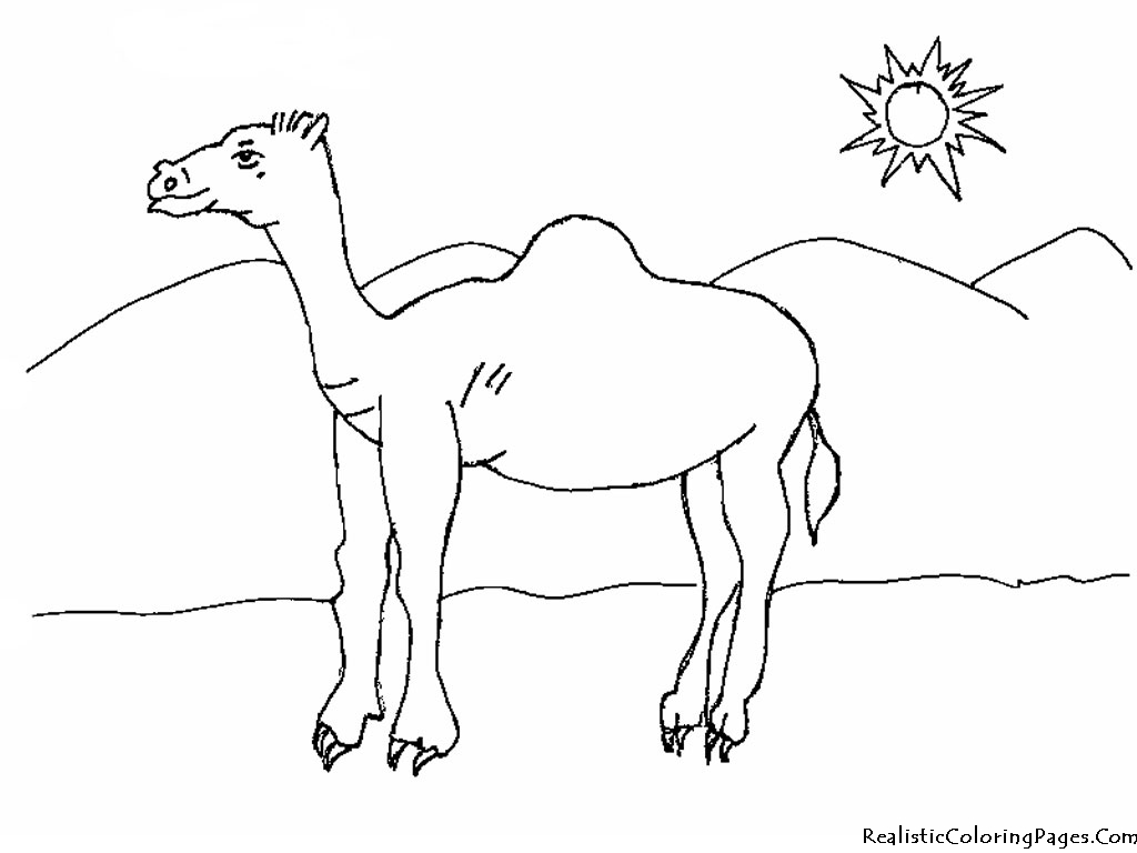 1024x768 Desert Camel Coloring Pages