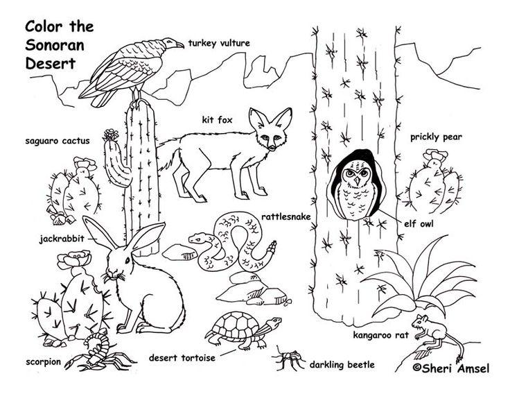Desert Drawing For Kids