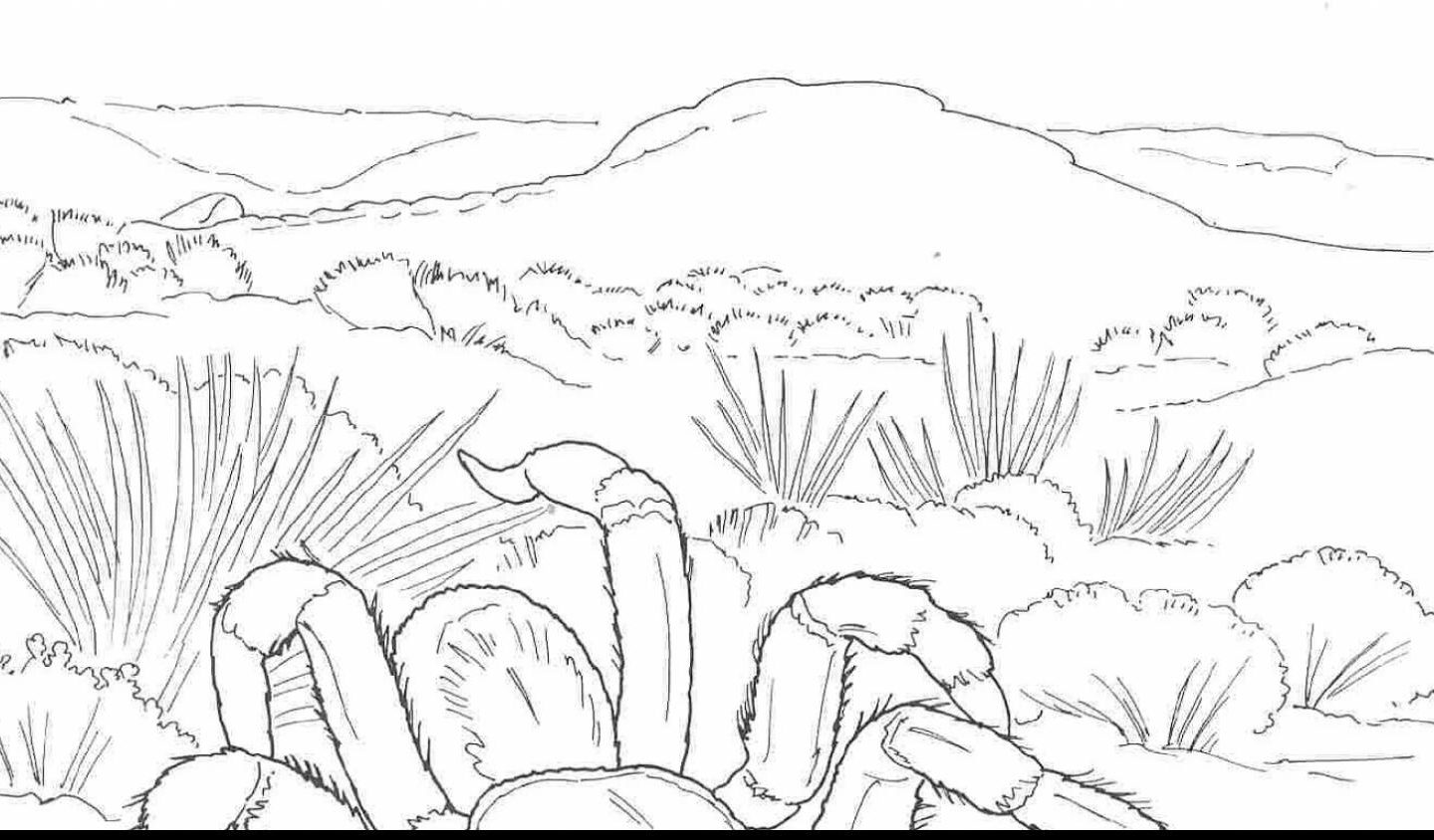 1440x844 Free Printable Coloring Desert Plants Pages For Adult And Book