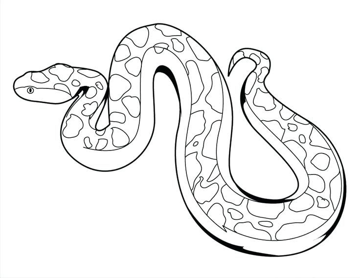 736x569 Reptiles Coloring Pages Desert Lizard Coloring Pages Reptiles