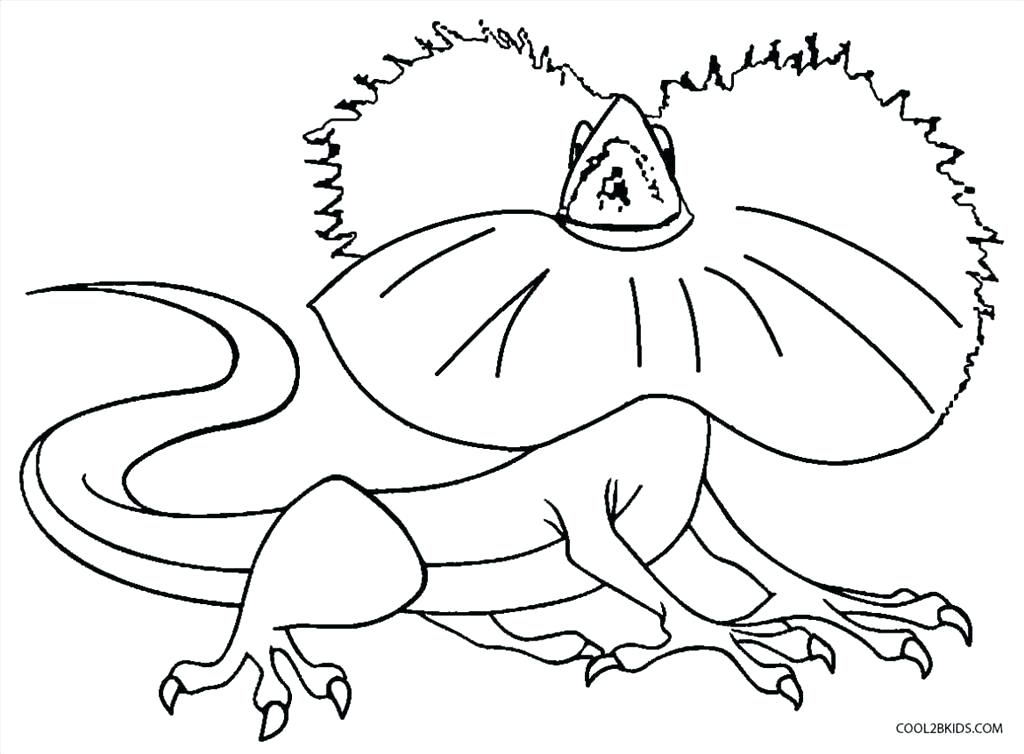 1024x754 Simple Lizard Coloring Pages Free Download Impressive Various