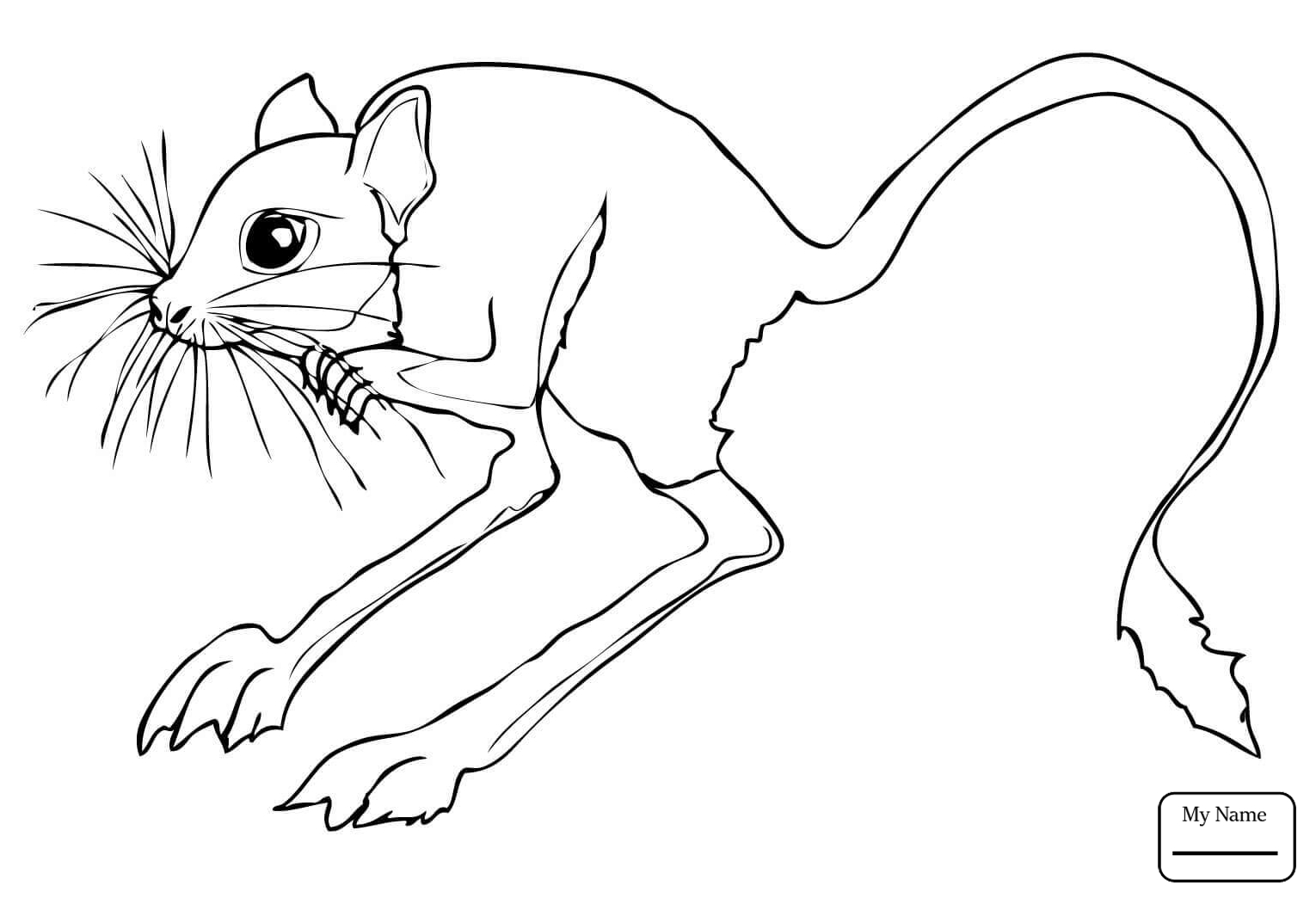 1530x1044 Mammals Jerboas Desert Rodent Jerboa Jerboas Coloring Pages