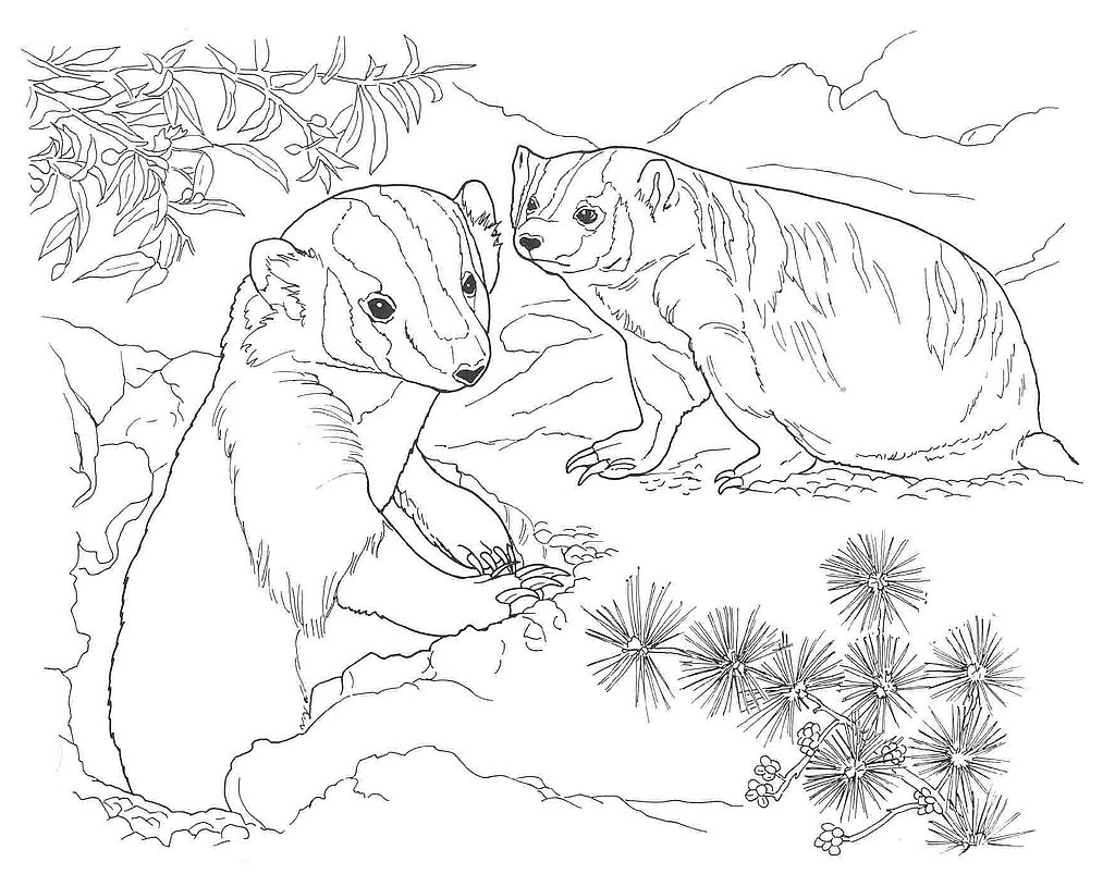 1024x803 Desert Animals Coloring Pages