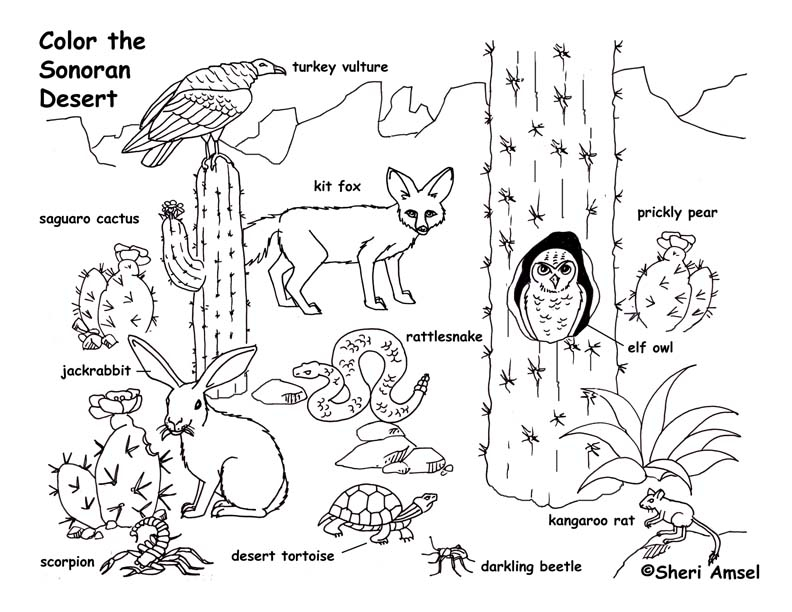 792x612 Desert Plant Coloring Pages Animal Coloring Pages