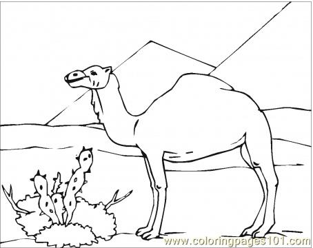 454x360 Camel In Desert Coloring Page