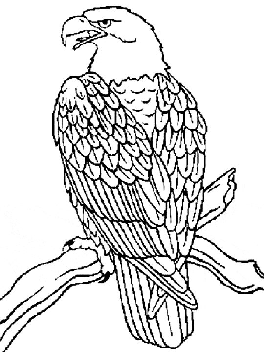 540x720 11 Best Eagle Coloring Pages Images On Eagle
