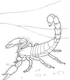 236x269 Scorpion Directed Draw For Our Desert Habitat Unit Directed