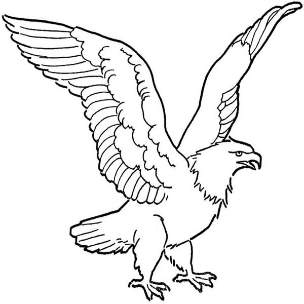 600x600 Soaring Bald Eagle Drawing Coloring Page