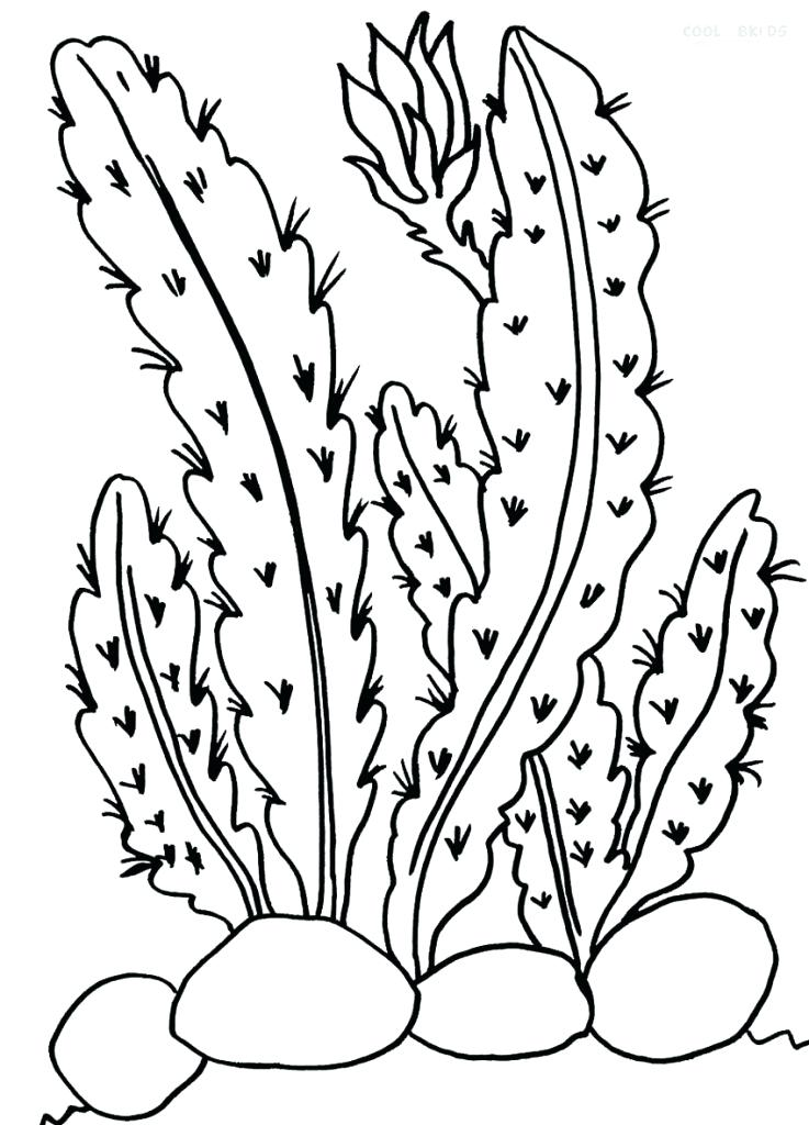 737x1024 Desert Plants Coloring Pages Animal Free T Sunset Cactus At Where