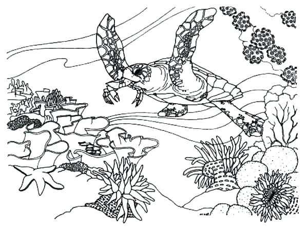 600x446 Ecosystem Coloring Pages Pictures Of Animals To Color Coral Reef