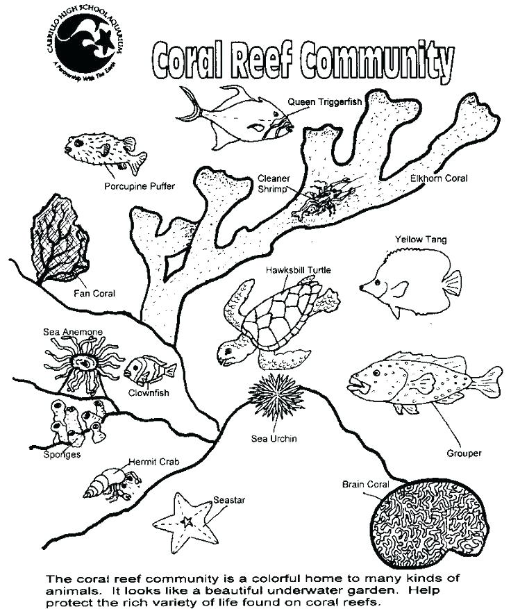 736x877 Food Chain Coloring Pages Book Coloring Food Chain Coloring Page