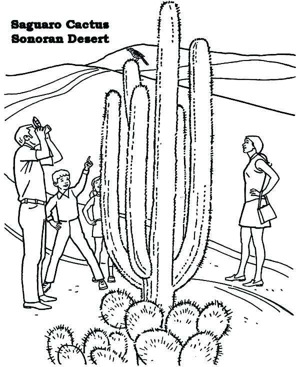 600x734 Biome Coloring Pages