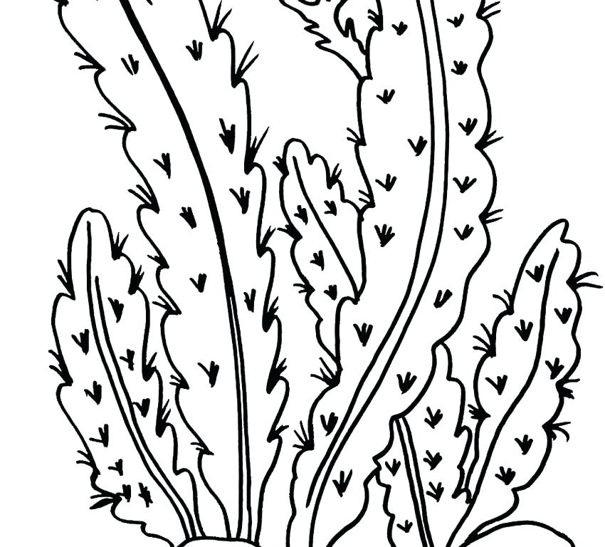 850x768 Desert Coloring Pages As Desert Plant Coloring Pages Desert