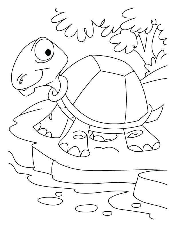 612x792 Desert Coloring Pages Printable Thirsty Tortoise On Download