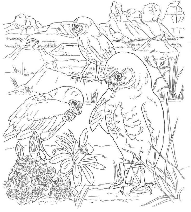 736x818 30 Best Desert Theme Images On Adult Coloring