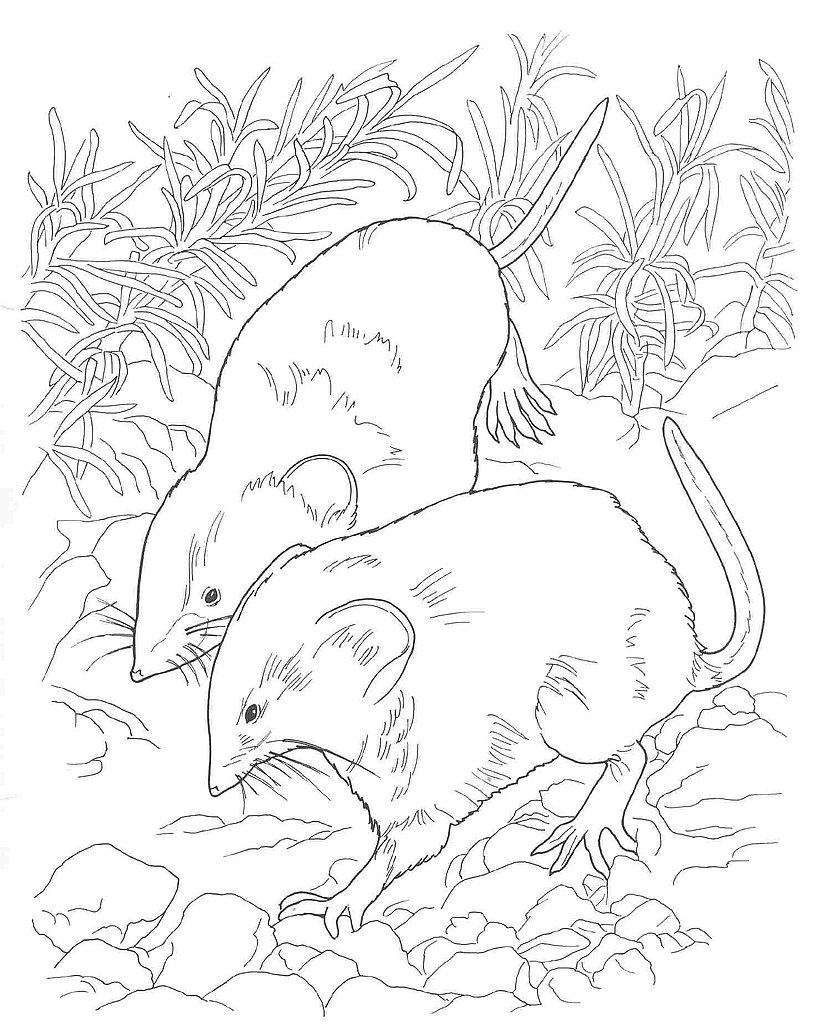 831x1024 Desert Coloring Pages