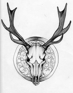 236x302 Biro Drawings Sheep Skull Cow Skull Deer Skull Inks