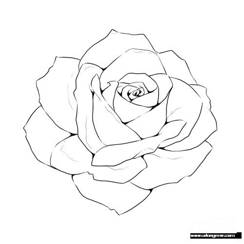 500x500 Rose Line Drawing Template