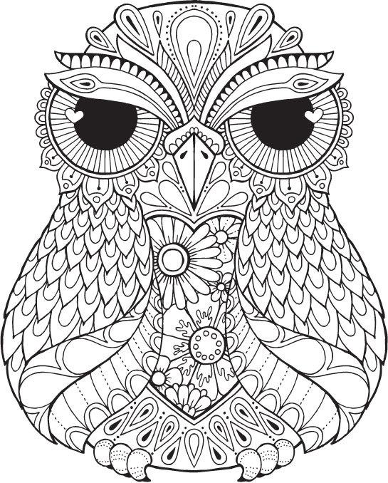 545x678 Lana Owl