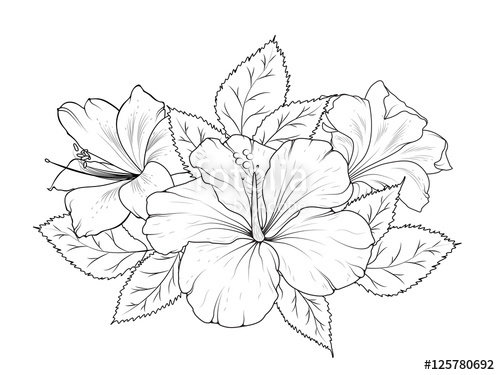 500x375 Hibiscus And Lily Flowers Bouquet Garland Composition. Isolated