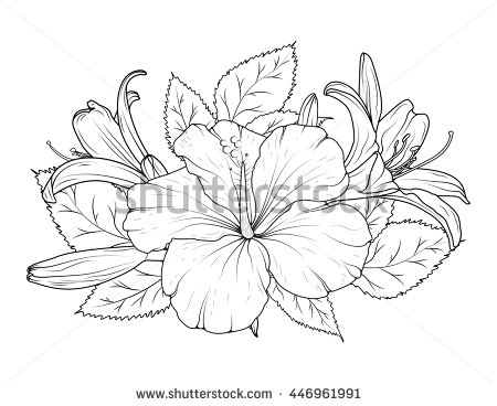 450x368 Hibiscus And Lily Flowers Bouquet. Detailed Vector Drawing. Spring