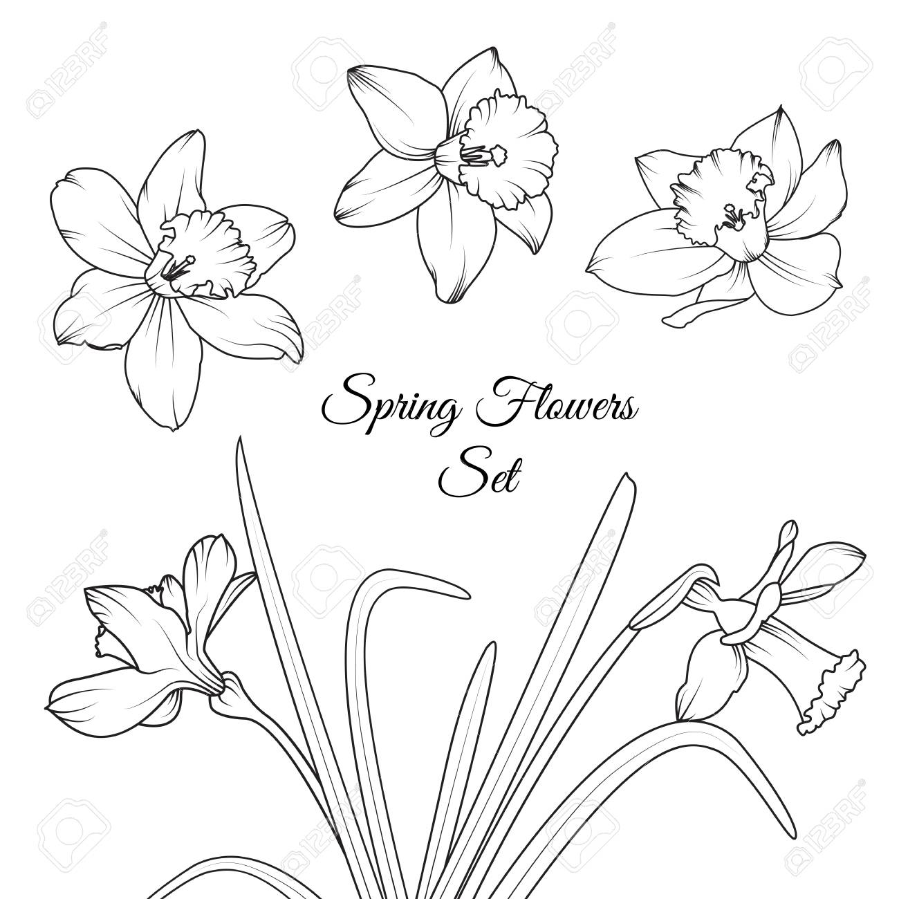1300x1300 Narcissus Daffodil Spring Flowers Reusable Isolated Elements