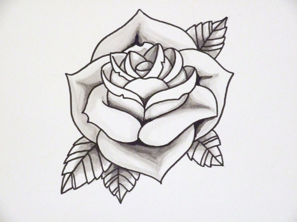 1024x768 Rose Drawing Lesson. How To Draw A Black Rose Step 5. Rose Drawing
