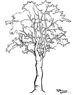 236x307 Brandon Orden Art Tree Drawings Landscape Drawings