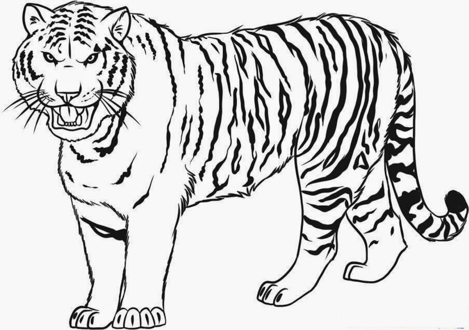 1600x1127 Tiger Coloring Pages For Kids Printable In Tiny Draw Photo