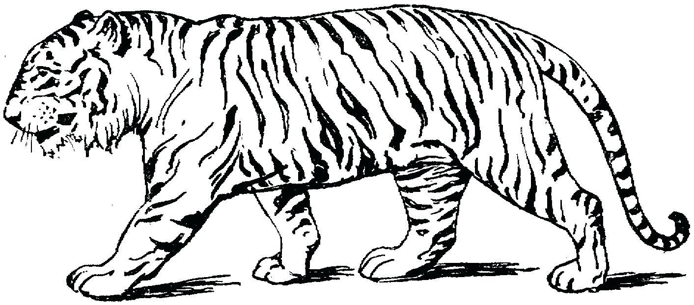 Outstanding Detroit Tiger Nail Art Vignette - Nail Paint Ideas ...