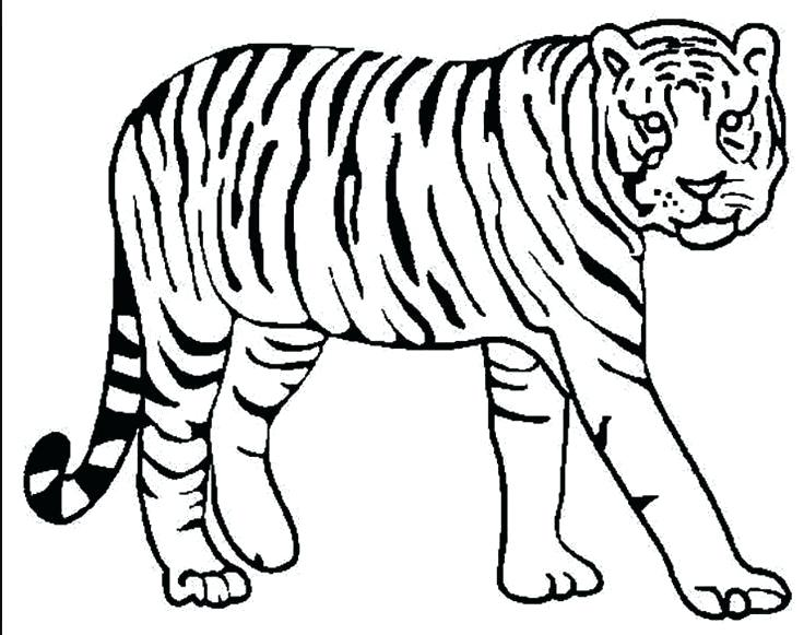 Detroit Tigers Drawing At Getdrawings Com Free For Personal Use