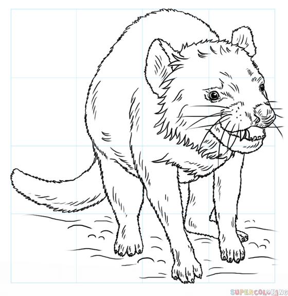 560x575 How To Draw A Tasmanian Devil Step By Step Drawing Tutorials