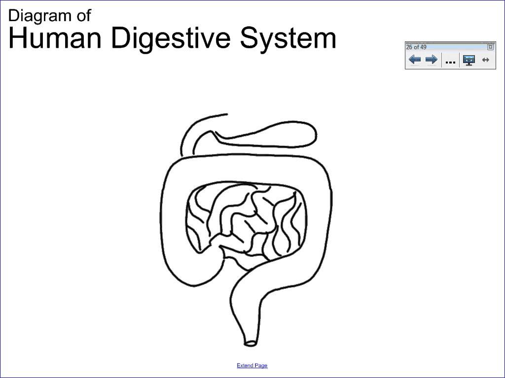 Digestive system drawing at getdrawings free for personal use human digestive system drawing ccuart Image collections