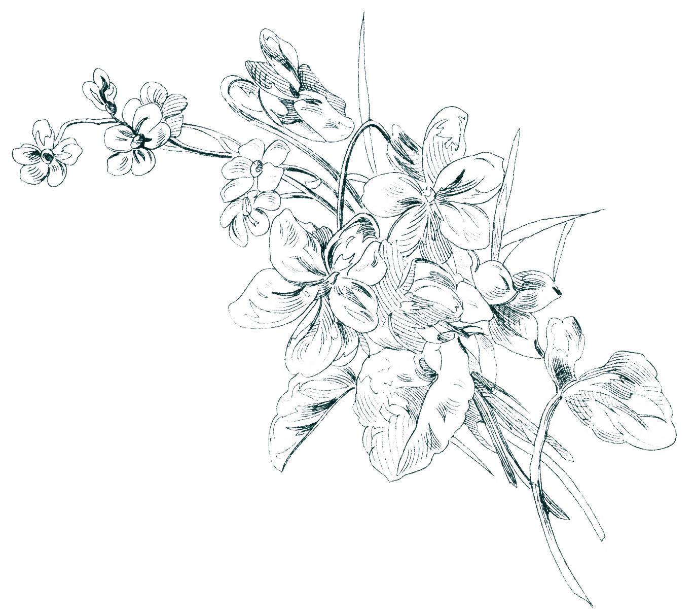 1371x1212 Old Design Shop ~ Free Digital Image Vintage Floral Sketch