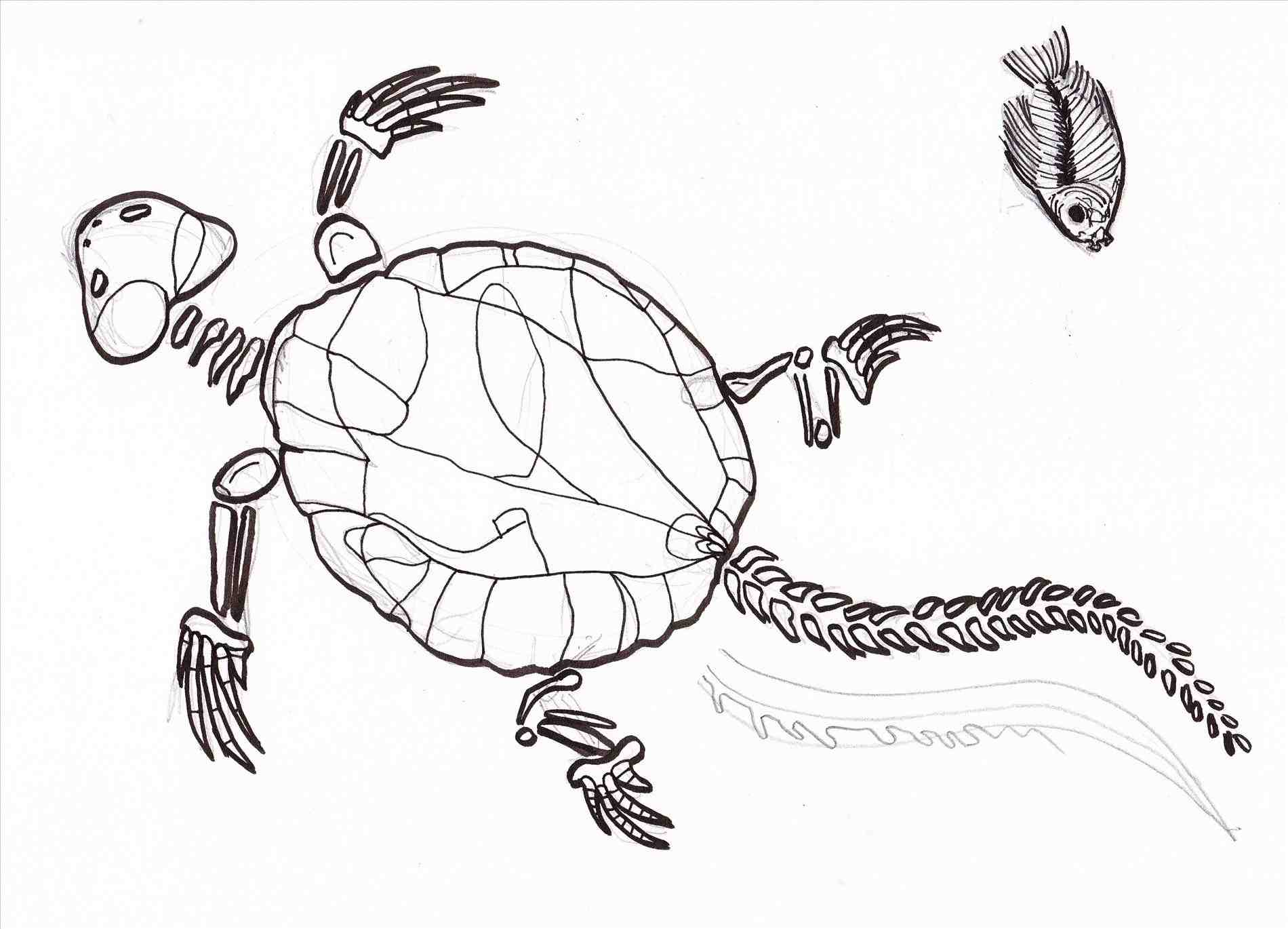 1900x1370 Dinosaur Fossil Coloring Pages