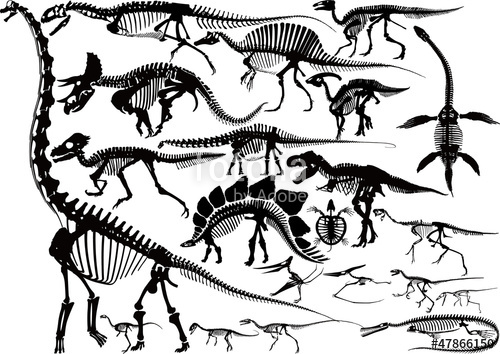 500x354 Dinosaur Skeleton Silhouette Collection Stock Image And Royalty