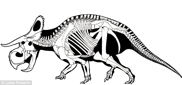 634x295 Fossils Of Giant Devil Like Dinosaur With Long Curved Horns