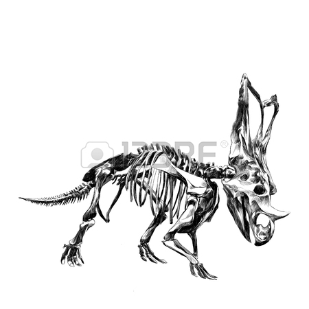 450x450 The Skeleton Of The Red Dinosaur Triceratops, Colored Drawing