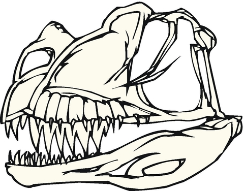 480x376 Dinosaur Bones Coloring Page Free Printable Coloring Pages
