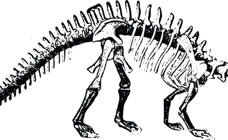 800x491 Dinosaur Skeleton With Flowers Gardening Flower And Vegetables