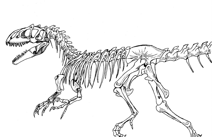 899x583 Tyrannosaurus Rex Skeleton Tattoo Info