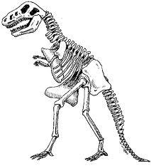 213x236 Dessin Squelette Dinosaure